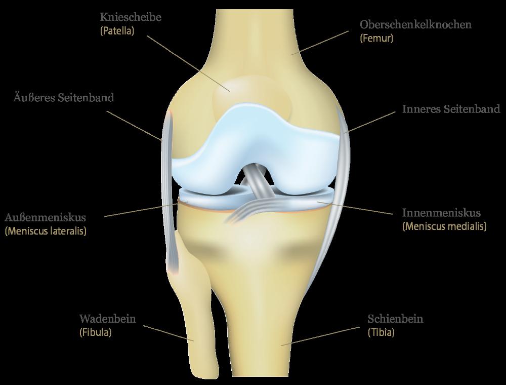 sportopaedie heidelberg endoprothetik knie illustration